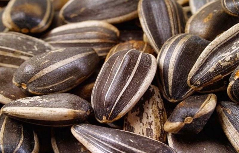 semi di girasole perchè fanno bene_800x513